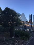 Taking a walk before soundcheck, Sydney, 2017.